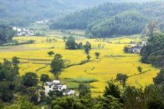 Autumn Harvest nel villaggio dell'Anhui fotografie stock libere da diritti