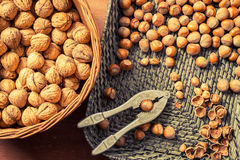 Autumn harvest of nuts Royalty Free Stock Image