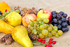 Autumn harvest - organic fruits Stock Images