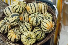 Autumn harvest. Organic products. Multi-colored pumpkins in a wicker wooden basket. Thanksgiving Day. royalty free stock images