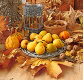 Autumn harvest of pears, nuts and pumpkins Royalty Free Stock Photo