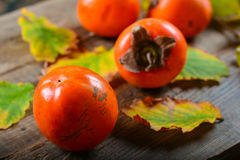 Autumn harvest of persimmon Royalty Free Stock Image