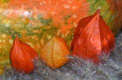 Autumn harvest - physalis flowers and orange pumpkin. Closeup of an autumn harvest - physalis flowers and orange pumpkin. Latvia, Europe royalty free stock photos