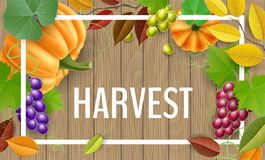 Autumn harvest plants on wood background. Autumn harvest vegetable and fruit, including, pumpkin, grape and tree leaves on brown wood texture background Royalty Free Stock Photography