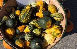 Autumn Harvest - populärer farbiger Kürbis Stockbild