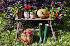 Autumn harvest. Pumpkin, apples and flowers lie on the bench Royalty Free Stock Photos