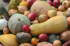 Autumn harvest. Pumpkin, apples, onions, cucumbers, radishes. Outdoors as background Royalty Free Stock Photo