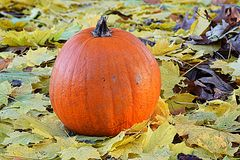 Autumn harvest. An pumpkin among leaves in early fall Stock Image