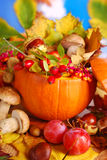 Autumn harvest in the pumpkin Stock Images