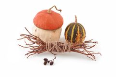 Autumn harvest of pumpkins royalty free stock image
