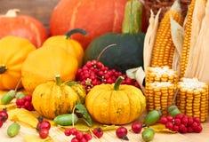 Autumn harvest: pumpkins, berries, corn, leaves and acorn stock photos