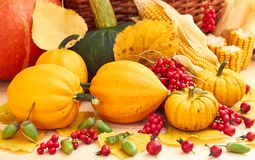 Autumn harvest: pumpkins, berries, corn, leaves and acorn stock photography
