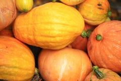 Autumn harvest of pumpkins halloween Stock Photos