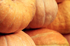 Autumn harvest of pumpkins halloween Royalty Free Stock Images