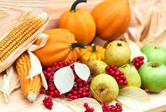 Autumn harvest: pumpkins, indian corn, red berries, pears, apples, fallen leaves on wooden background. Thanksgiving concept stock photo