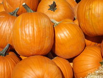 Autumn harvest Royalty Free Stock Image