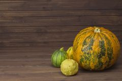 Autumn harvest of pumpkins. Preparing for Halloween. Growing vegetables in a home garden. Place for your text. Royalty Free Stock Images