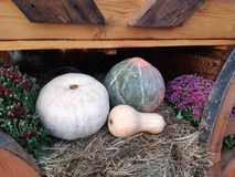 Autumn harvest. royalty free stock images