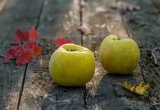 Autumn harvest of quince tree fruit stock photo