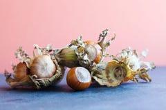 Autumn harvest ripe hazelnut Corylus Maxima. Organic filbert cobnuts with dried leaves on stone, pink background. Macro view, sele. Ctive focus foto Royalty Free Stock Photo
