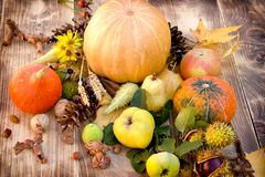 Autumn harvest, seasonal fruit and vegetable - healthy eating, healthy food. Harvest on table - thanksgiving, seasonal fruit and vegetable, pumpkin and squash Royalty Free Stock Photo