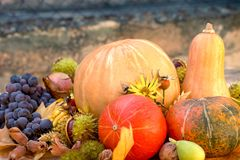 Autumn harvest - seasonal organic fruit and vegetable. Harvest on table - thanksgiving, seasonal fruit and vegetable, pumpkin and squash Stock Images