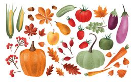 Autumn harvest set. Collection of ripe delicious vegetables, fresh fruits, berries, fallen leaves, acorns isolated on. White background. Colorful elegant vector illustration