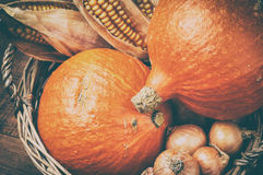 Autumn harvest setting with pumpkins and corn Royalty Free Stock Photo