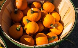 Autumn Harvest - Small pumpkins royalty free stock images
