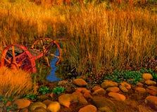 Autumn Harvest Splender dans l'herbe d'or photos libres de droits