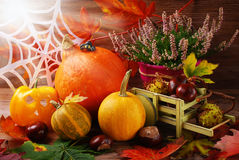 Autumn harvest still life Stock Photos