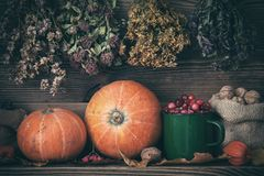 Autumn harvest still life: pumpkins, cranberries, walnuts and hanging bunches of healing herbs. Royalty Free Stock Image