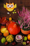Autumn harvest still life Royalty Free Stock Image