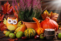 Autumn harvest still life Royalty Free Stock Photo