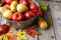 Autumn harvest and thanksgiving card background Stock Images