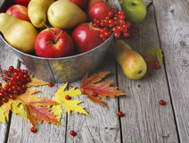 Autumn harvest and thanksgiving card background Stock Photography