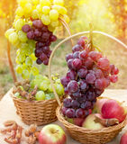 Autumn harvest - thanksgiving Royalty Free Stock Photos