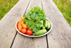 Autumn harvest. There is the harvest of cucumbers and tomatoes with the celery leaves on the plate. Buffet lunch in the garden Stock Photo