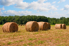 Autumn - Harvest time. Rolls of mown hay in the setting sun Royalty Free Stock Image