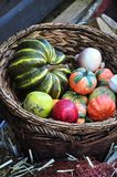 Autumn harvest vegetables Royalty Free Stock Images