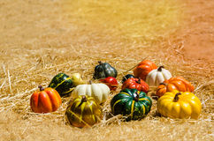 Autumn harvest vegetables background Stock Photo