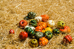 Autumn harvest vegetables background Royalty Free Stock Photo