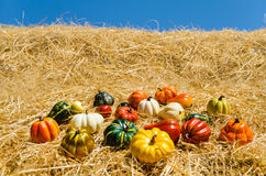 Autumn harvest vegetables background Stock Photos