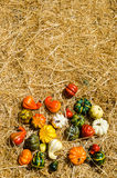 Autumn harvest vegetables background Royalty Free Stock Photography