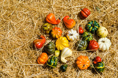 Autumn harvest vegetables background Stock Images