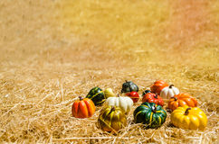 Autumn harvest vegetables background Stock Photography