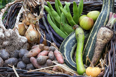 Autumn Harvest Vegetables na cesta Foto de Stock Royalty Free