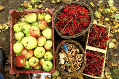 Autumn harvest - viburnum, mushrooms, apples Stock Photography