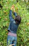 Autumn harvest Royalty Free Stock Image