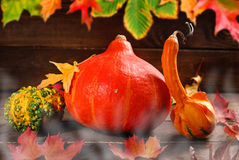 Autumn harvest on wooden background Royalty Free Stock Image
